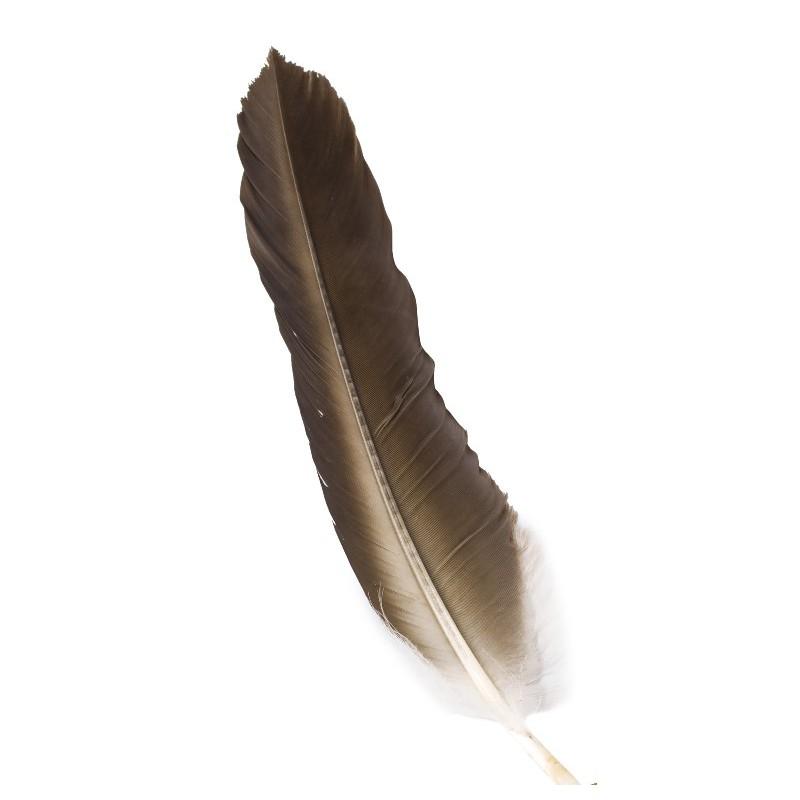 Pluma Chamánica
